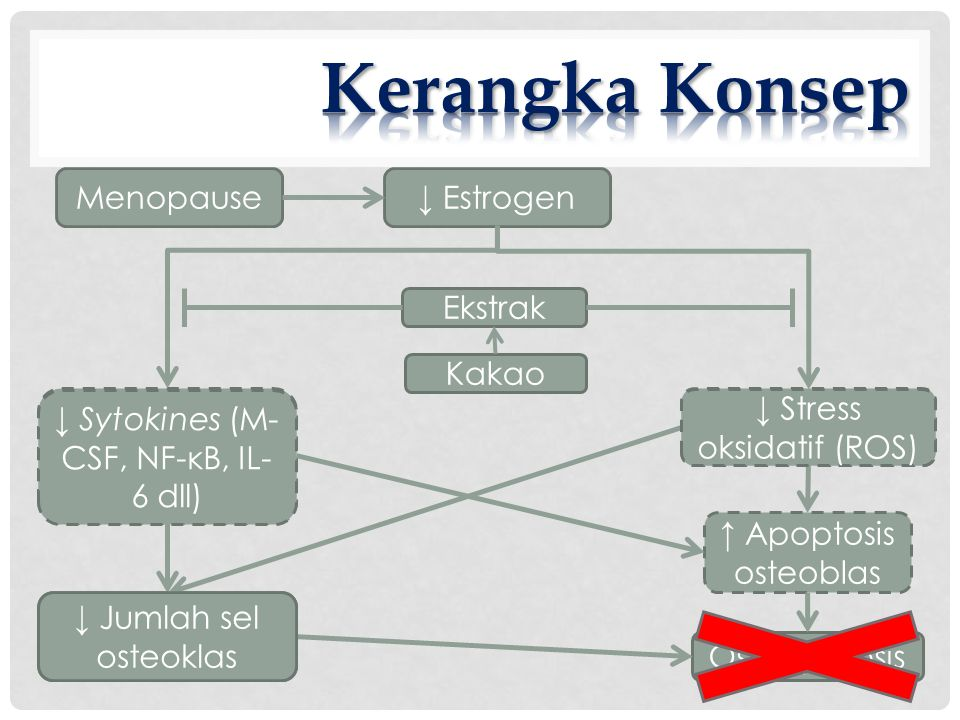 Kerangka Konsep Menopause ↓ Estrogen Ekstrak Kakao