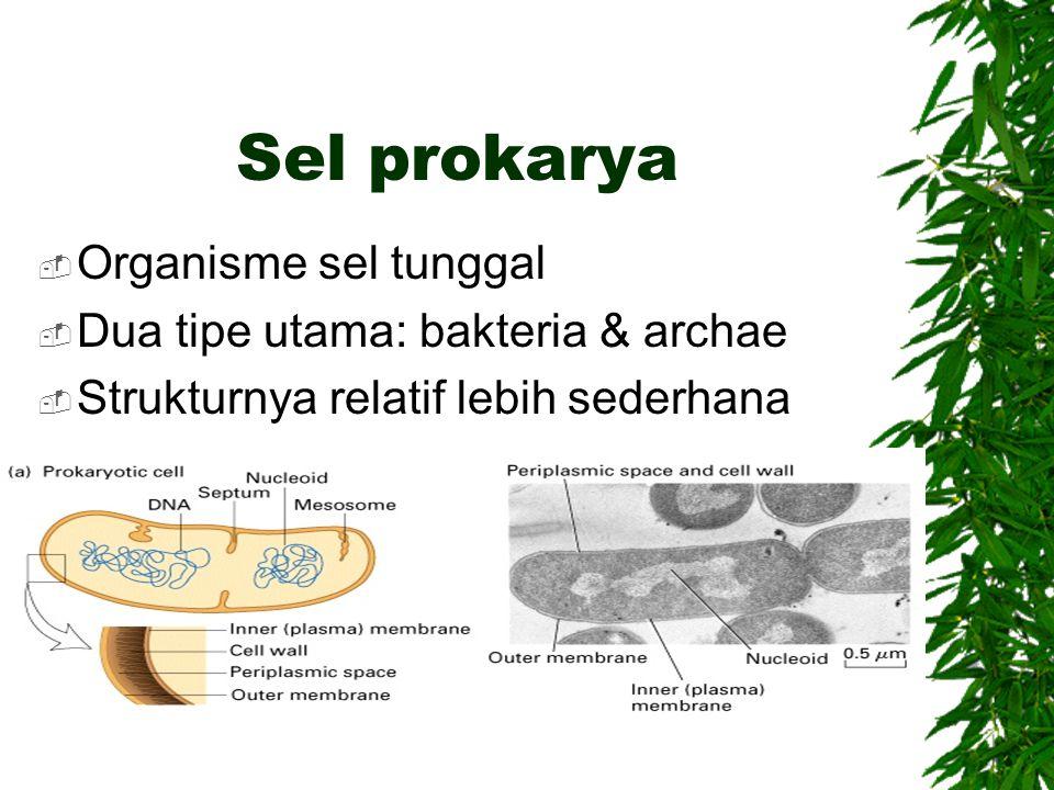 Sel prokarya Organisme sel tunggal Dua tipe utama: bakteria & archae