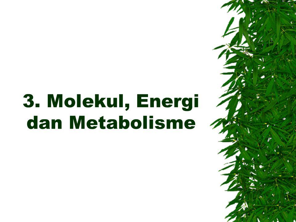 3. Molekul, Energi dan Metabolisme