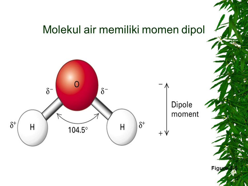 Molekul air memiliki momen dipol