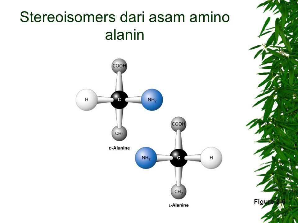 Stereoisomers dari asam amino alanin