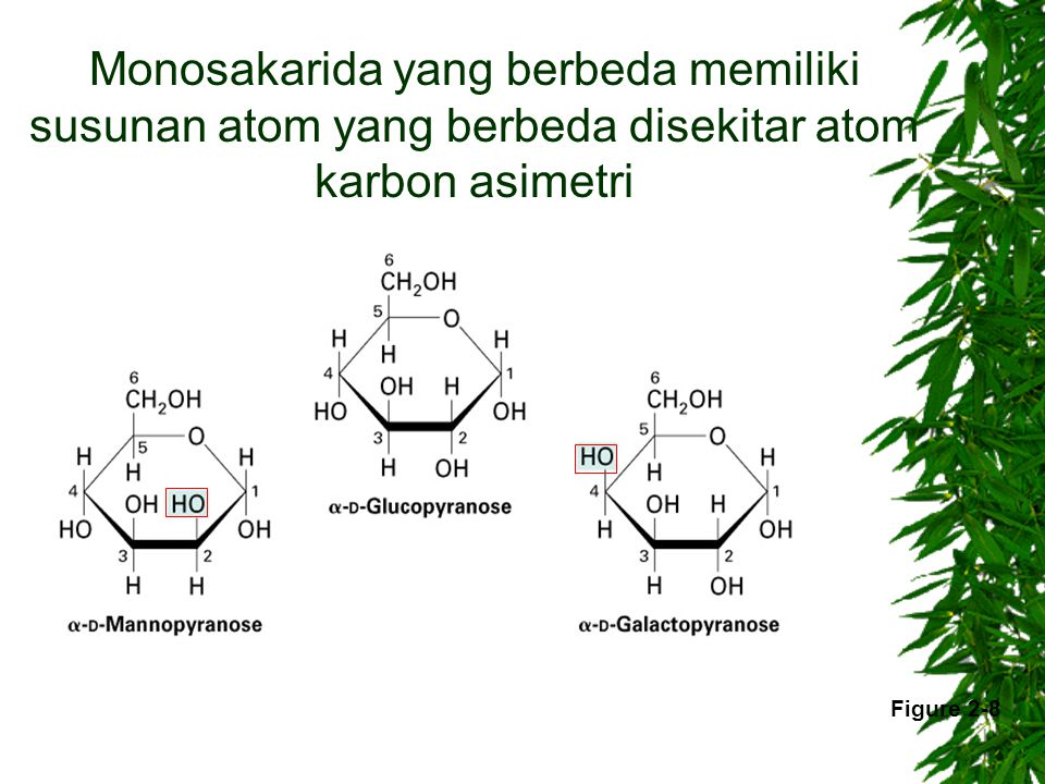 Monosakarida yang berbeda memiliki susunan atom yang berbeda disekitar atom karbon asimetri