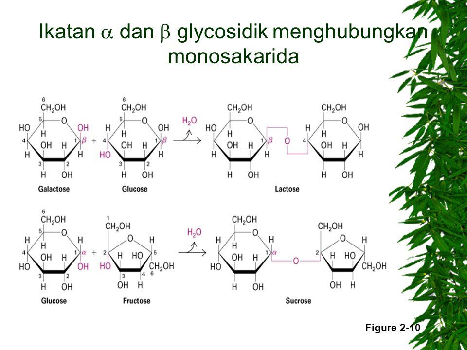Ikatan  dan  glycosidik menghubungkan monosakarida