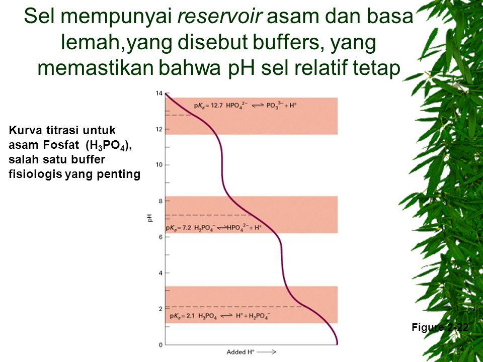 Sel mempunyai reservoir asam dan basa lemah,yang disebut buffers, yang memastikan bahwa pH sel relatif tetap