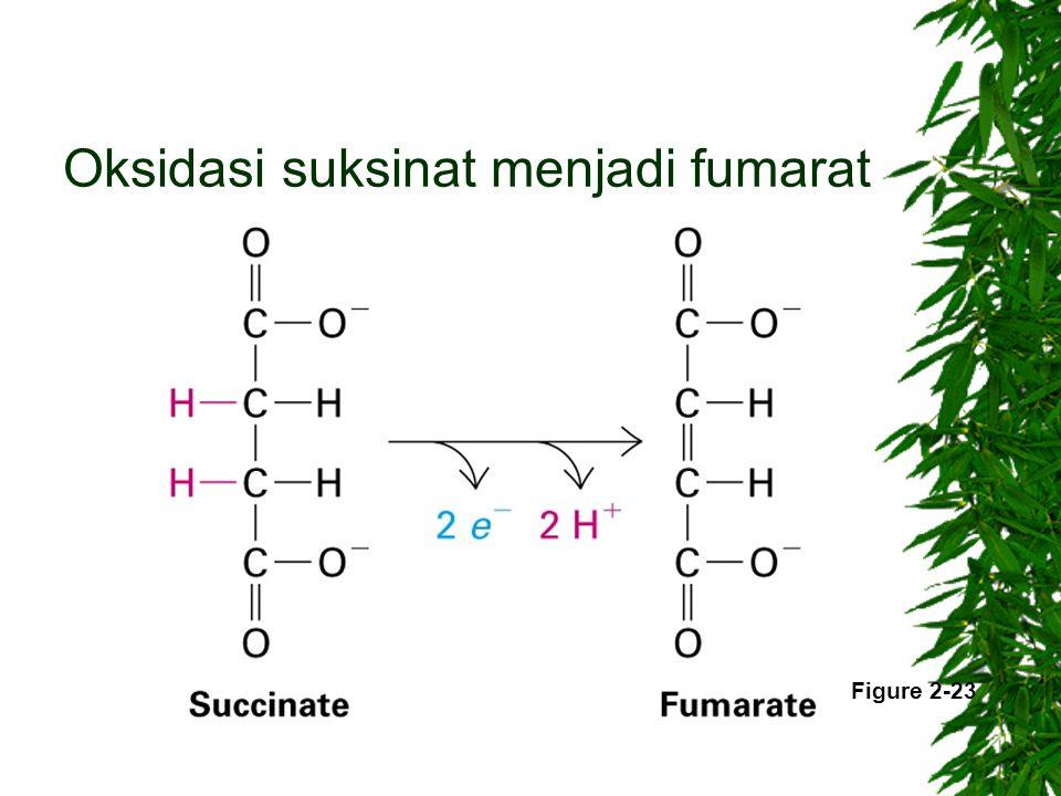 Oksidasi suksinat menjadi fumarat