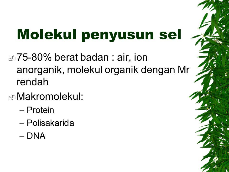 Molekul penyusun sel 75-80% berat badan : air, ion anorganik, molekul organik dengan Mr rendah. Makromolekul: