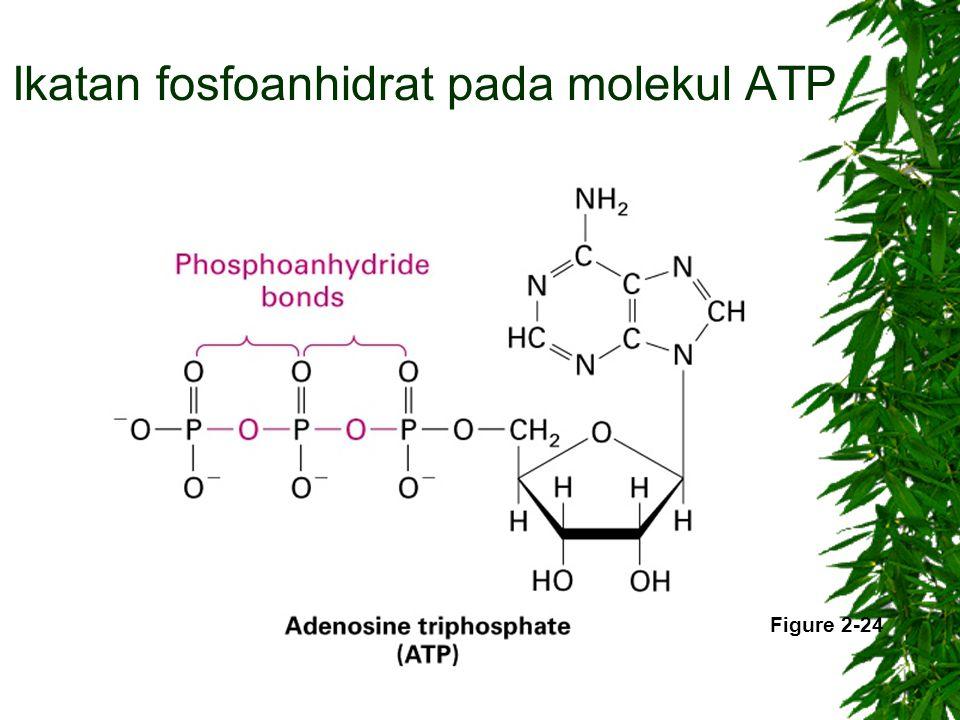 Ikatan fosfoanhidrat pada molekul ATP