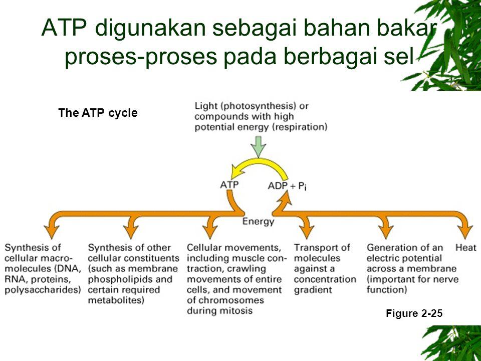 ATP digunakan sebagai bahan bakar proses-proses pada berbagai sel