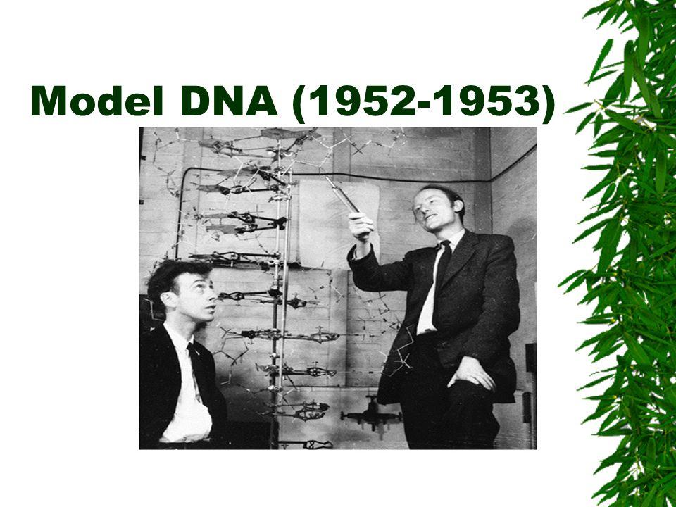 Model DNA (1952-1953)