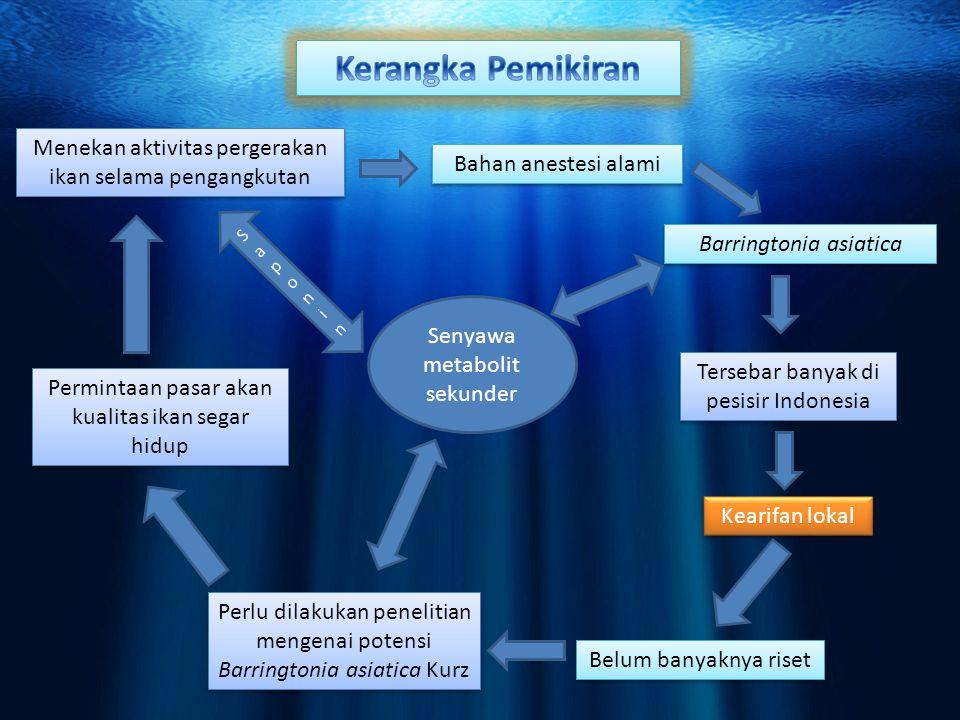 Kerangka Pemikiran Menekan aktivitas pergerakan ikan selama pengangkutan. Bahan anestesi alami. Saponin.
