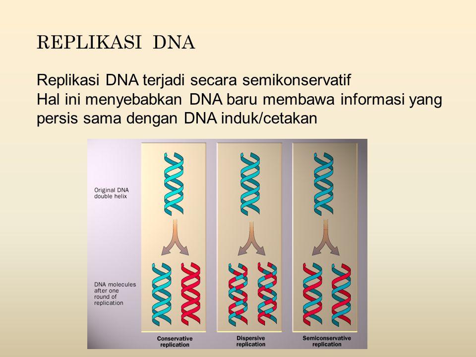 REPLIKASI DNA Replikasi DNA terjadi secara semikonservatif