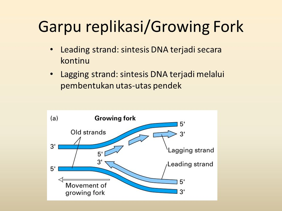 Garpu replikasi/Growing Fork