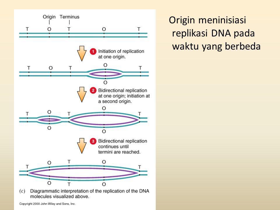 Origin meninisiasi replikasi DNA pada waktu yang berbeda