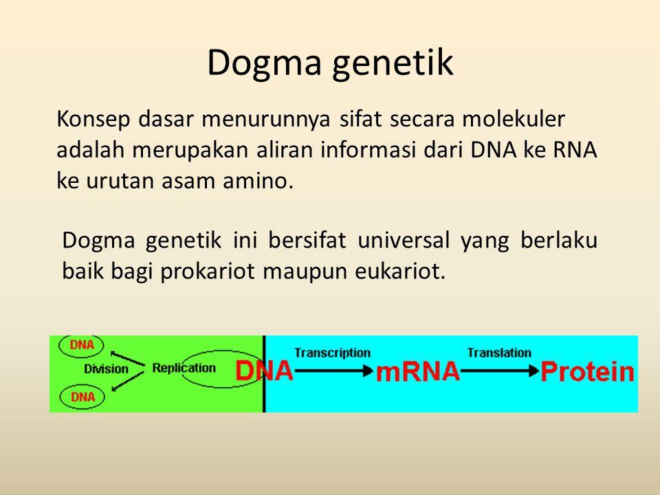 Dogma genetik Konsep dasar menurunnya sifat secara molekuler adalah merupakan aliran informasi dari DNA ke RNA ke urutan asam amino.