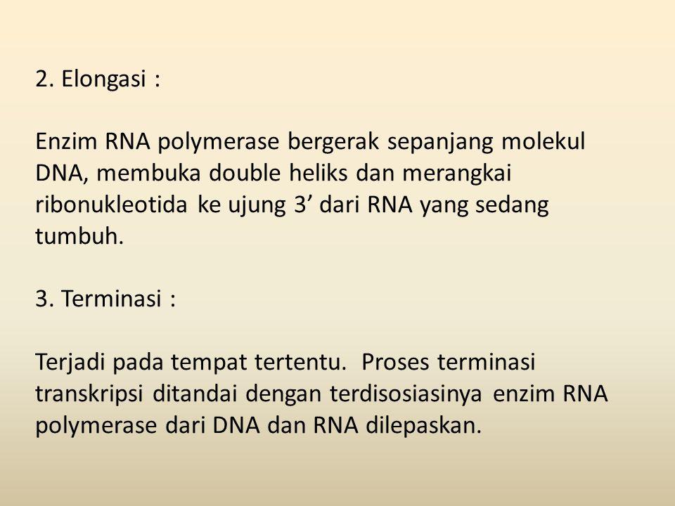 2. Elongasi :