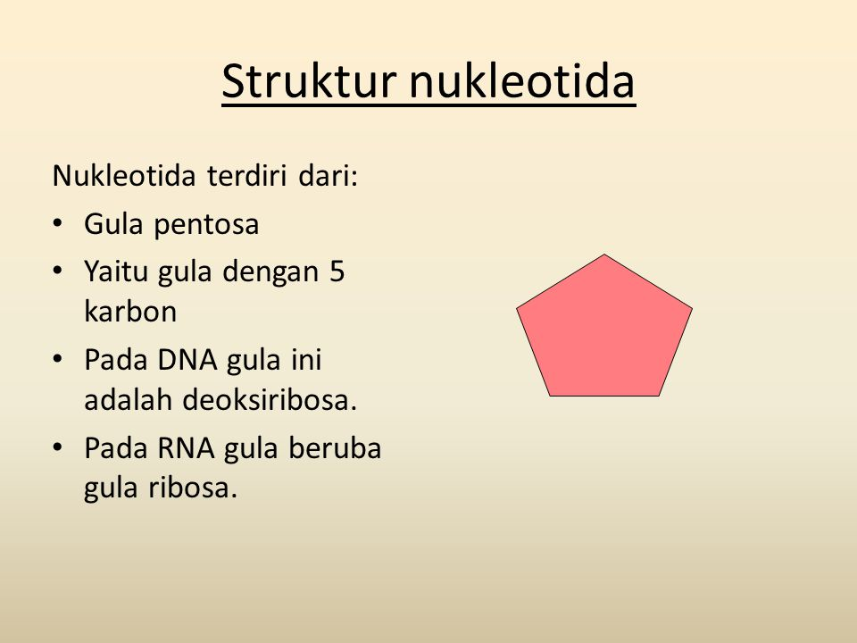 Struktur nukleotida Nukleotida terdiri dari: Gula pentosa
