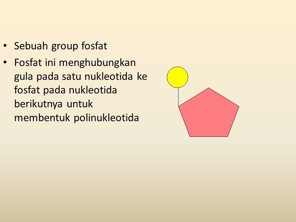 Sebuah group fosfat Fosfat ini menghubungkan gula pada satu nukleotida ke fosfat pada nukleotida berikutnya untuk membentuk polinukleotida.