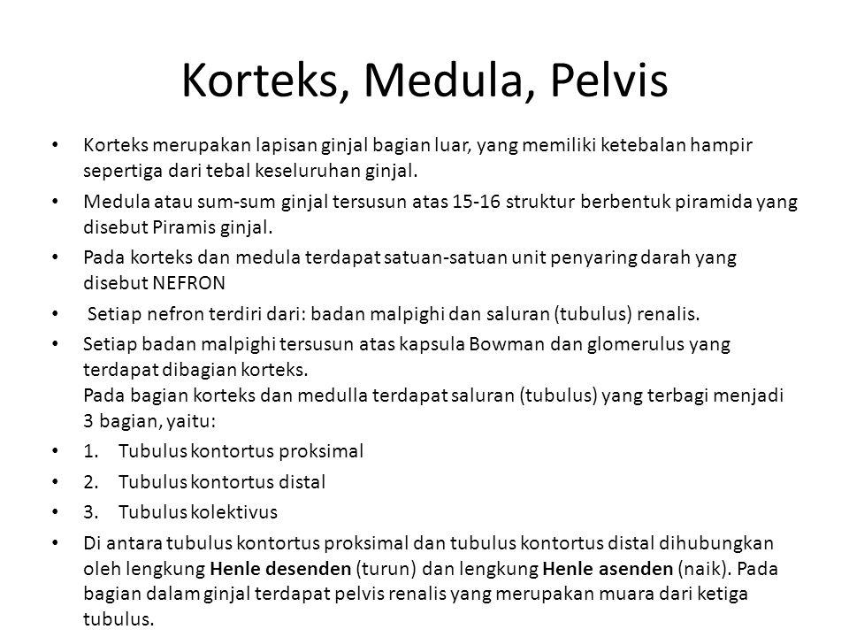 Korteks, Medula, Pelvis Korteks merupakan lapisan ginjal bagian luar, yang memiliki ketebalan hampir sepertiga dari tebal keseluruhan ginjal.
