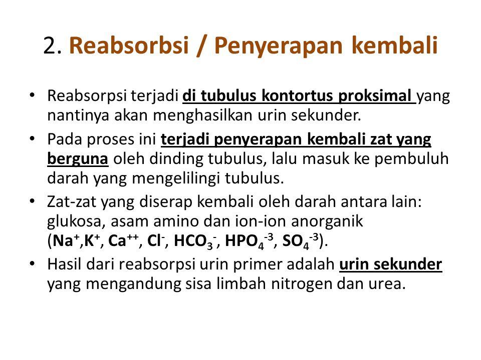 2. Reabsorbsi / Penyerapan kembali