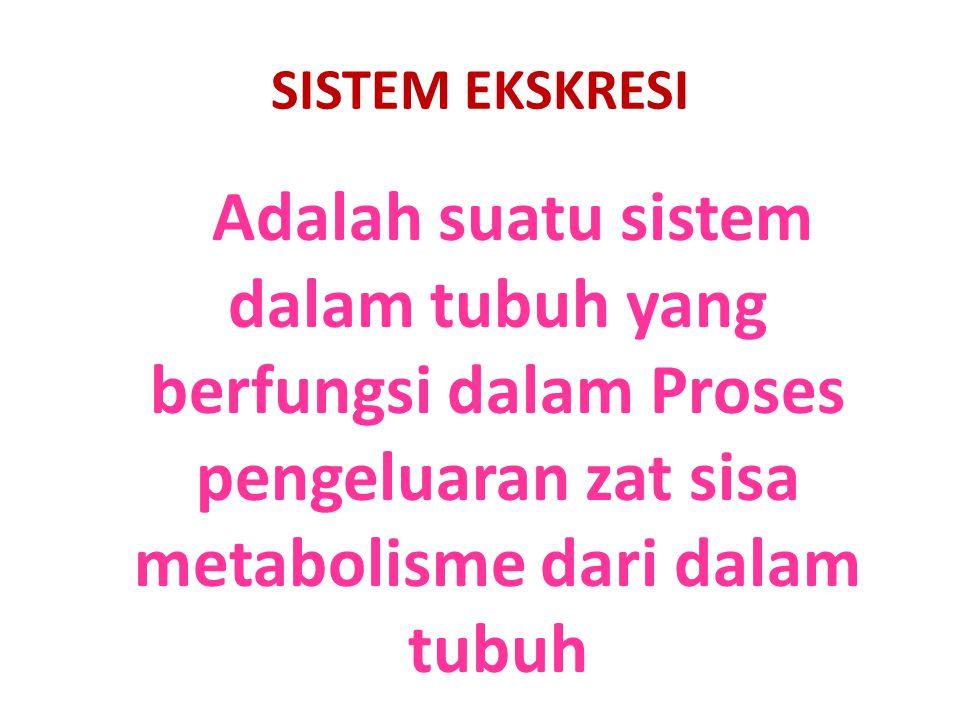 SISTEM EKSKRESI Adalah suatu sistem dalam tubuh yang berfungsi dalam Proses pengeluaran zat sisa metabolisme dari dalam tubuh.