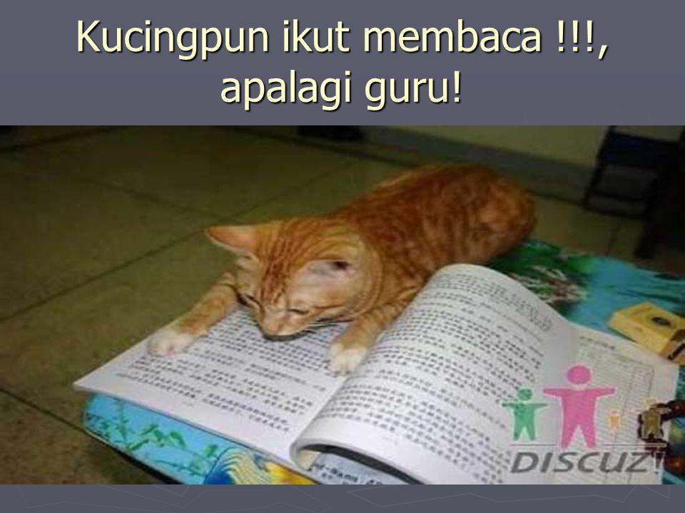 Kucingpun ikut membaca !!!, apalagi guru!