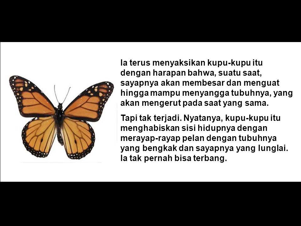 Ia terus menyaksikan kupu-kupu itu dengan harapan bahwa, suatu saat, sayapnya akan membesar dan menguat hingga mampu menyangga tubuhnya, yang akan mengerut pada saat yang sama.