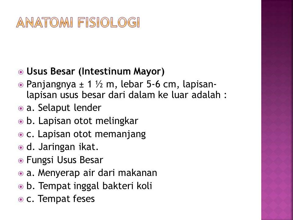 ANATOMI FISIOLOGI Usus Besar (Intestinum Mayor)