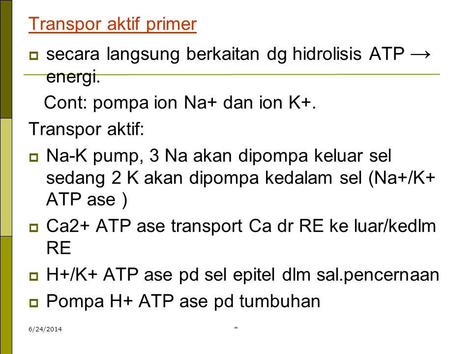 secara langsung berkaitan dg hidrolisis ATP → energi.