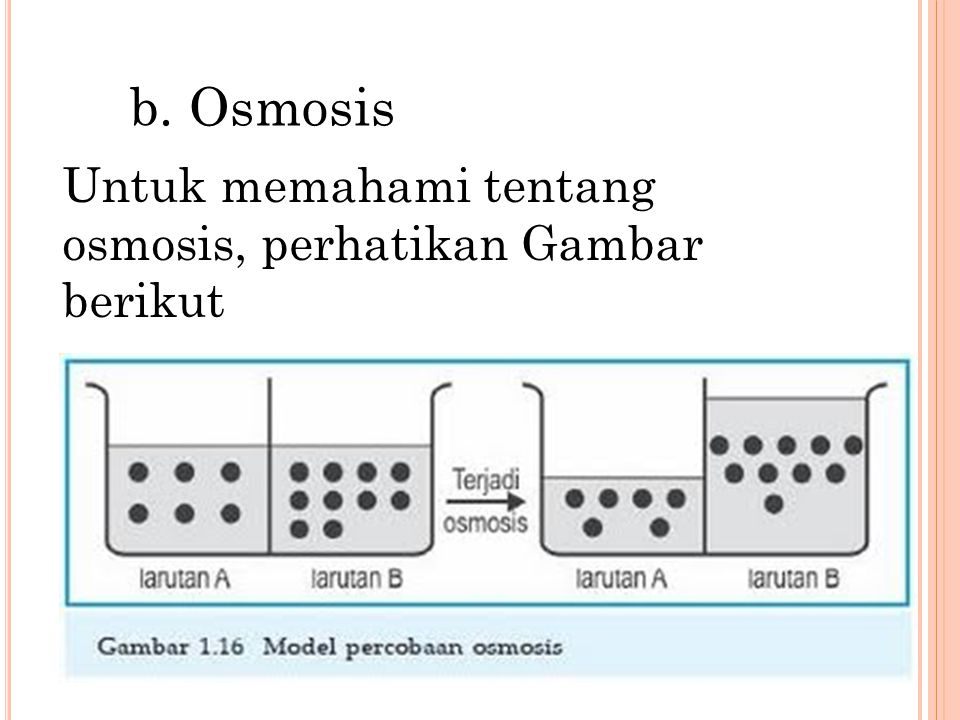 b. Osmosis Untuk memahami tentang osmosis, perhatikan Gambar berikut