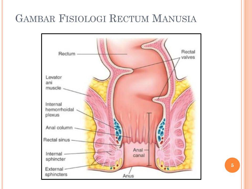 Gambar Fisiologi Rectum Manusia