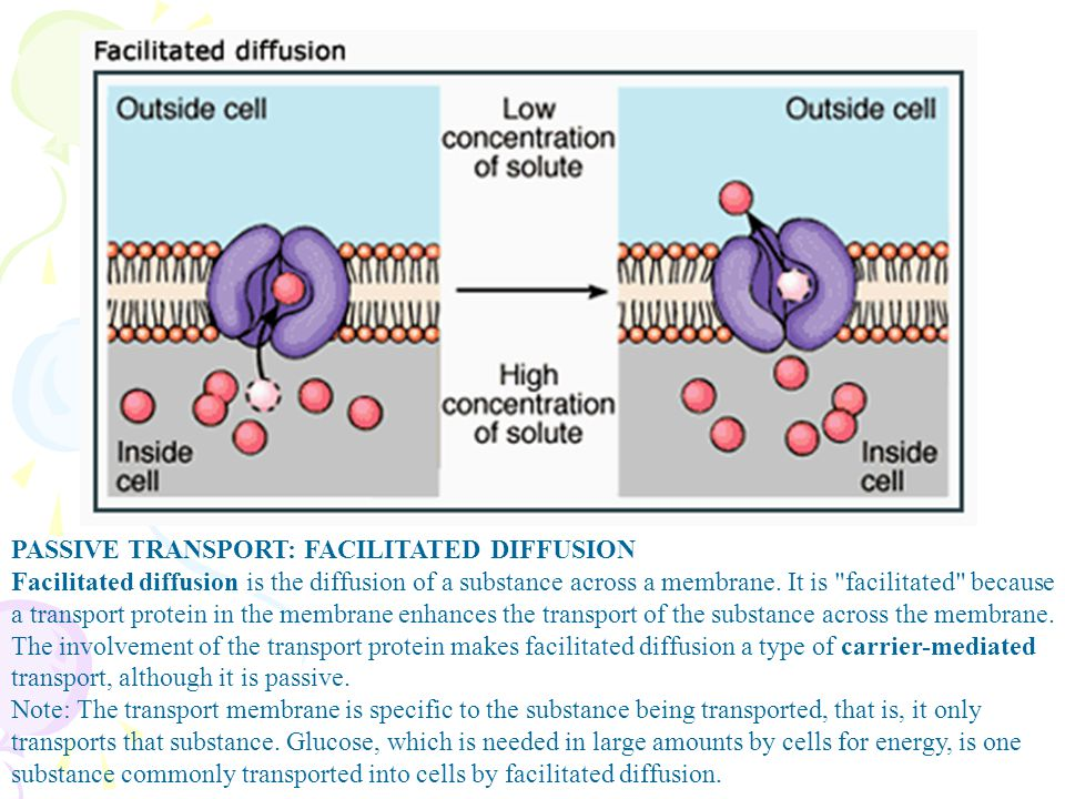 PASSIVE TRANSPORT: FACILITATED DIFFUSION Facilitated diffusion is the diffusion of a substance across a membrane. It is facilitated because a transport protein in the membrane enhances the transport of the substance across the membrane.