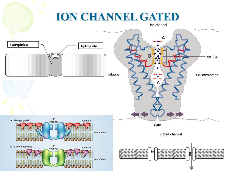 ION CHANNEL GATED