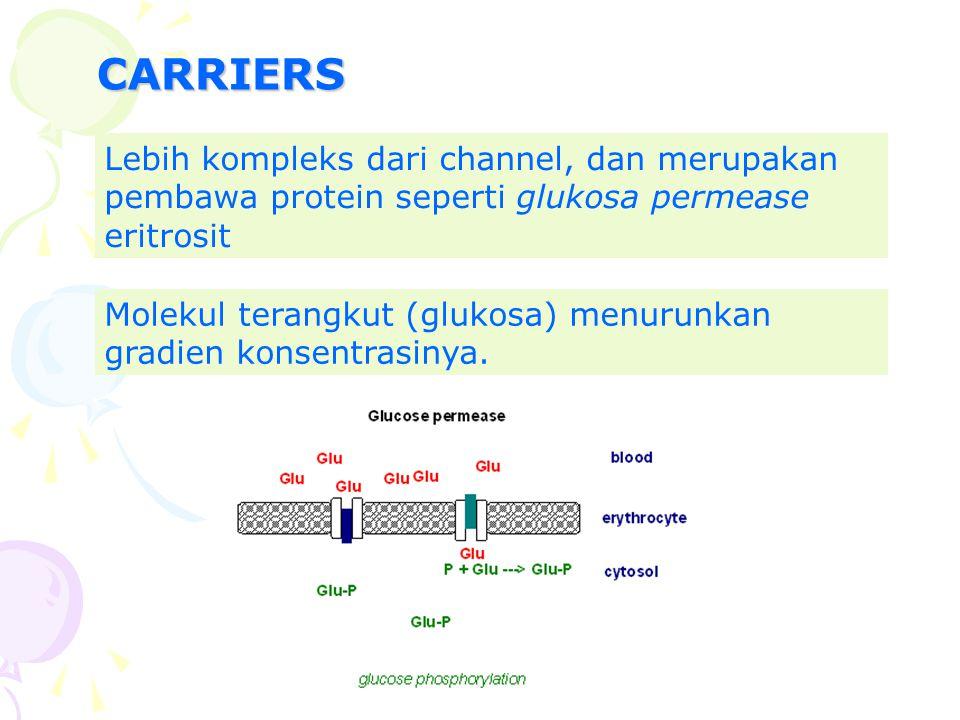 CARRIERS Lebih kompleks dari channel, dan merupakan pembawa protein seperti glukosa permease eritrosit.