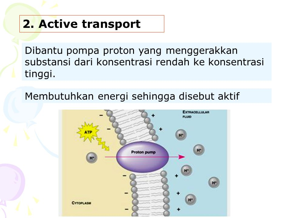 2. Active transport Dibantu pompa proton yang menggerakkan substansi dari konsentrasi rendah ke konsentrasi tinggi.