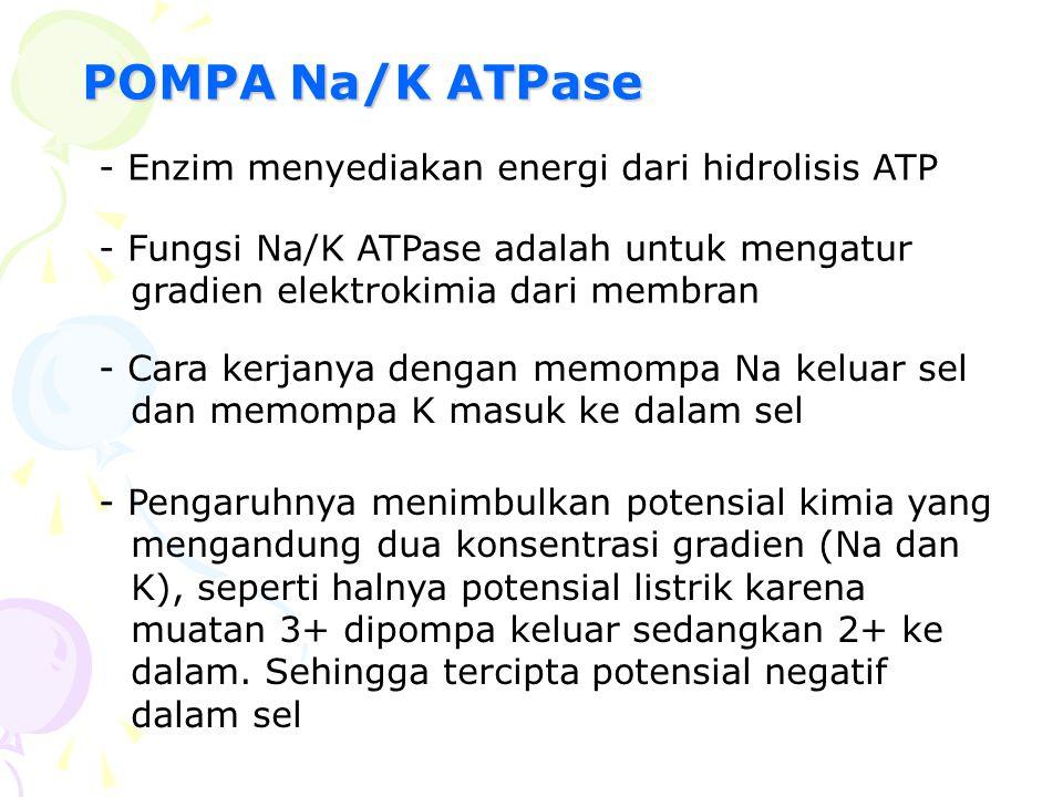POMPA Na/K ATPase - Enzim menyediakan energi dari hidrolisis ATP