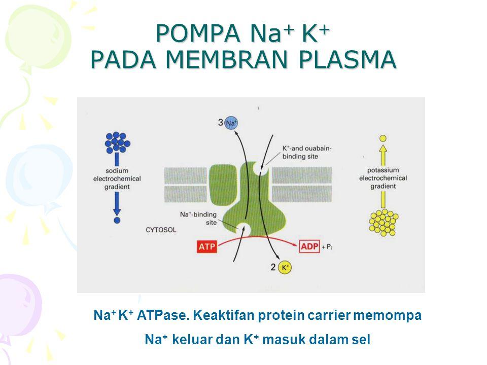 POMPA Na+ K+ PADA MEMBRAN PLASMA