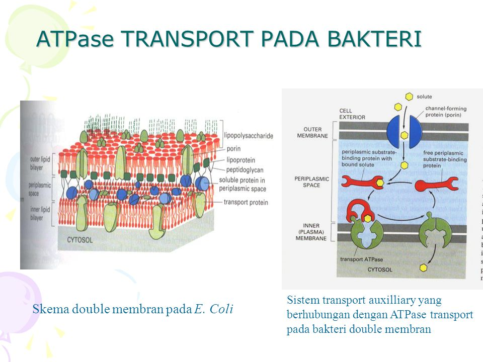 ATPase TRANSPORT PADA BAKTERI