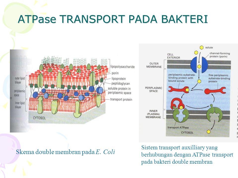 ATPase TRANSPORT PADA BAKTERI
