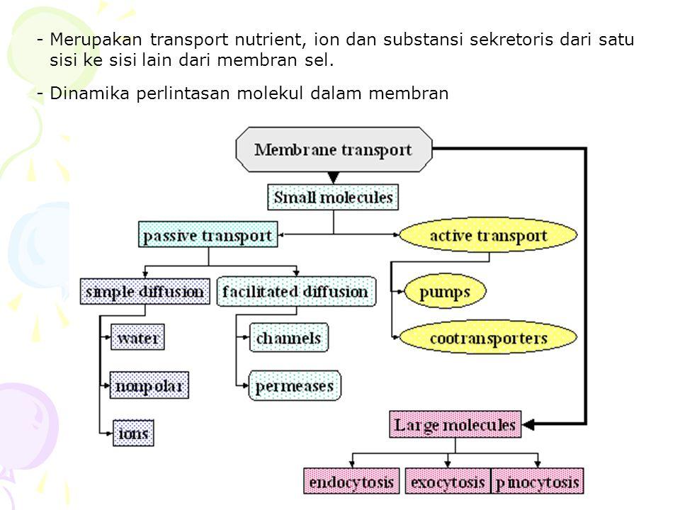 - Merupakan transport nutrient, ion dan substansi sekretoris dari satu sisi ke sisi lain dari membran sel.