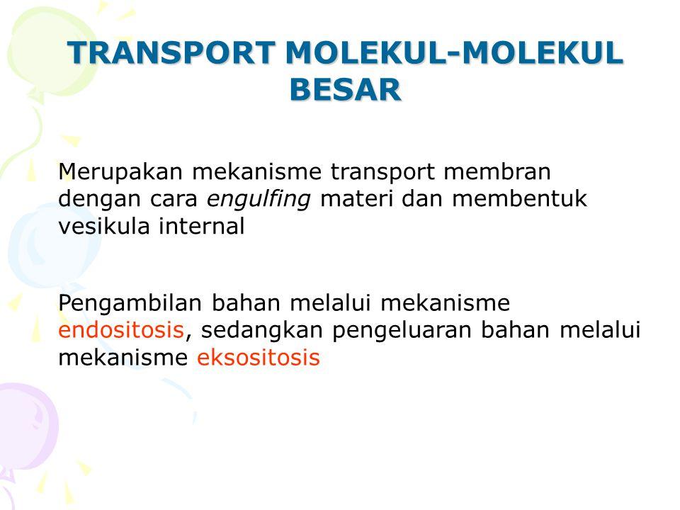 TRANSPORT MOLEKUL-MOLEKUL BESAR