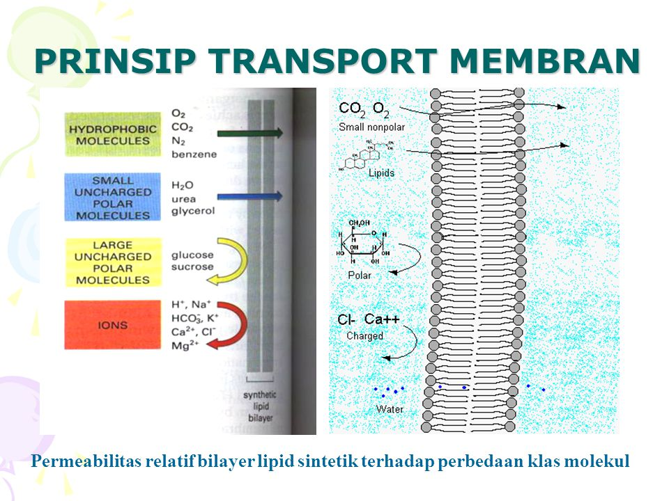 PRINSIP TRANSPORT MEMBRAN