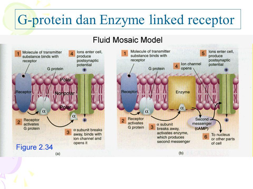 G-protein dan Enzyme linked receptor