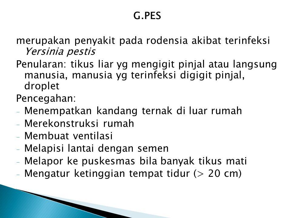 G.PES merupakan penyakit pada rodensia akibat terinfeksi Yersinia pestis.