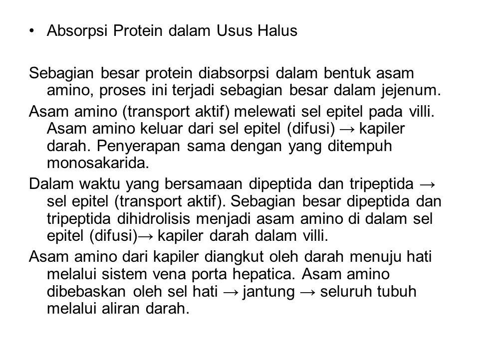 Absorpsi Protein dalam Usus Halus