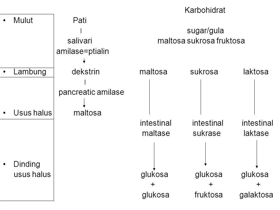 Karbohidrat Mulut Pati. ׀ sugar/gula.