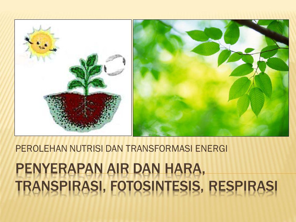 Penyerapan air dan hara, transpirasi, fotosintesis, respirasi