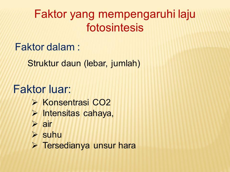 Faktor yang mempengaruhi laju fotosintesis