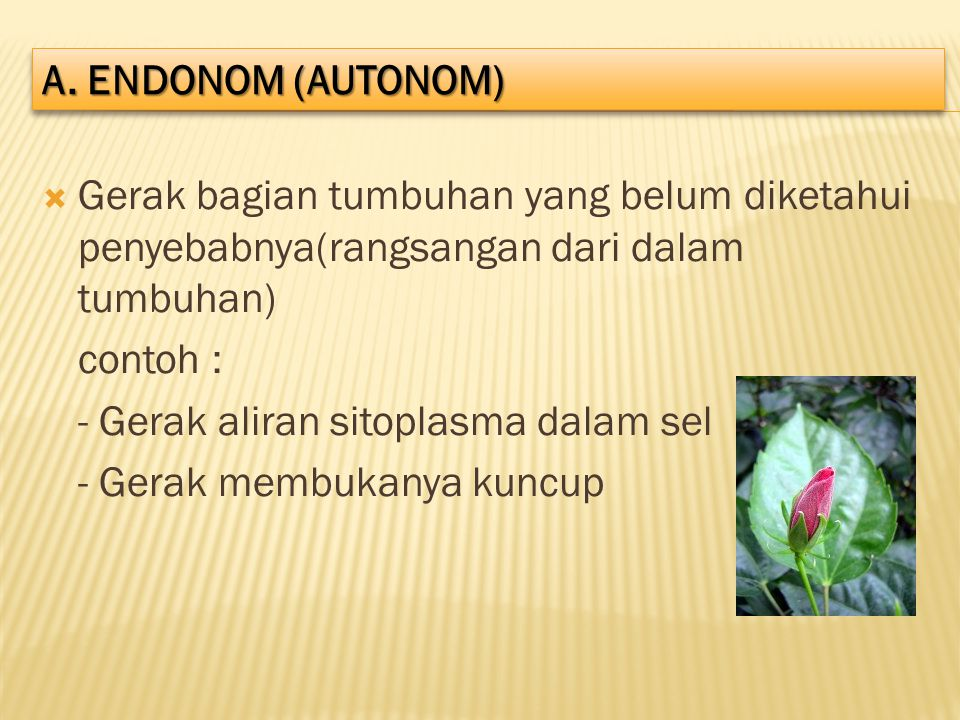 A. ENDONOM (AUTONOM) Gerak bagian tumbuhan yang belum diketahui penyebabnya(rangsangan dari dalam tumbuhan)