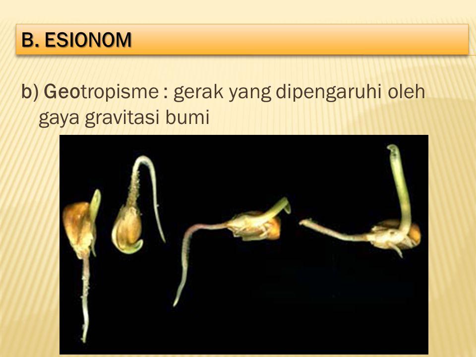 b. ESIONOM b) Geotropisme : gerak yang dipengaruhi oleh gaya gravitasi bumi