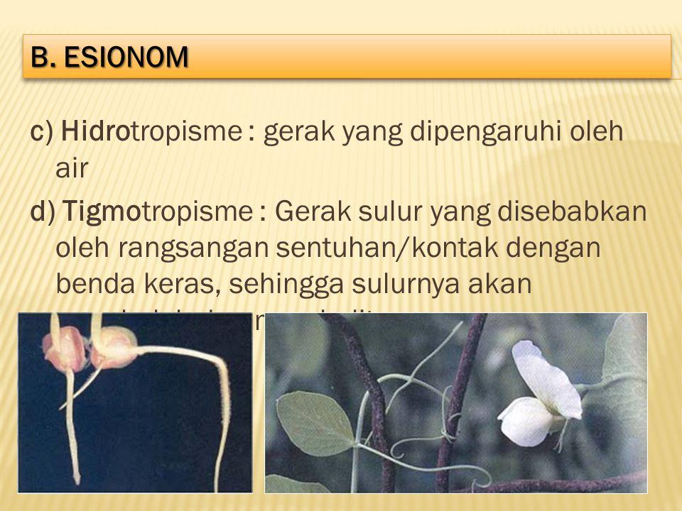 b. ESIONOM c) Hidrotropisme : gerak yang dipengaruhi oleh air.